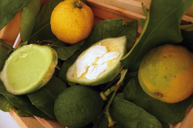 Το «Kαφάσι με τα Λεμόνια»  στη «Σελήνη» της Σαντορίνης