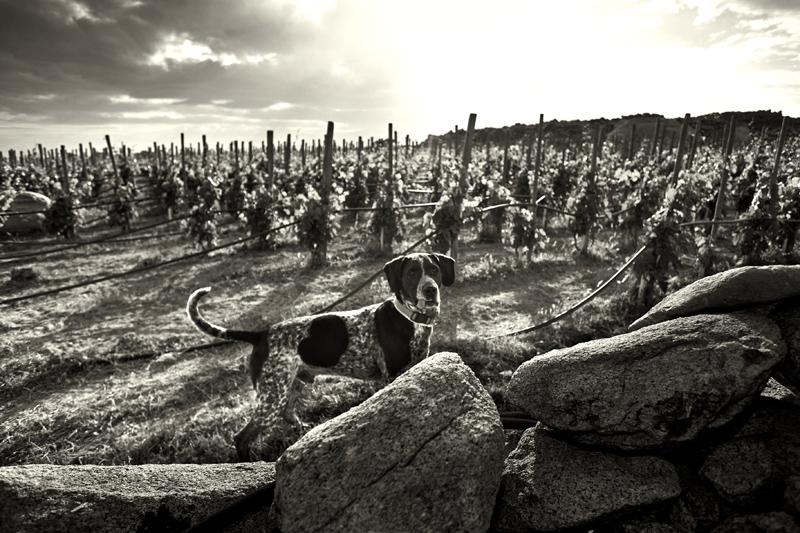 Τα όπλα της Τιτανομαχίας  κάνουν κορυφαία τα κρασιά T-OINOS - Χρυσοί Σκούφοι
