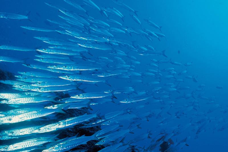 Δείτε τα 31 εστιατόρια που συμμετέχουν στη Restaurant Fishweek 2017 και απολαύστε υπεύθυνη ψαροφαγία  - Χρυσοί Σκούφοι