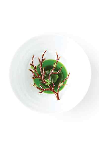 Καλλιτεχνική αναπαράσταση της γεύσης του δάσους στο «Geranium».